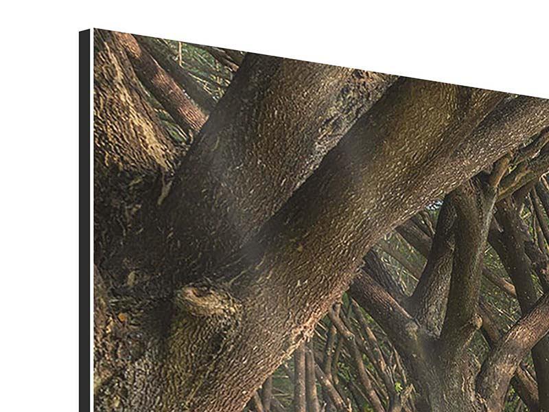 Panorama Aluminiumbild 3-teilig Alter Baumbestand
