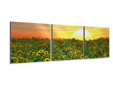 Panorama Aluminiumbild 3-teilig Blumenpanorama bei Sonnenuntergang