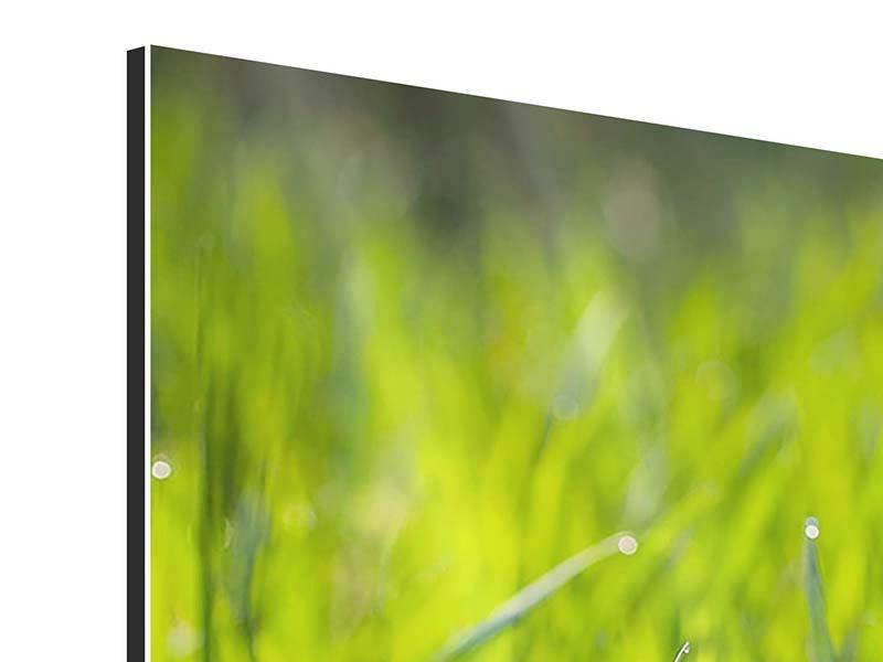 Panorama Aluminiumbild 3-teilig Gras im Morgentau