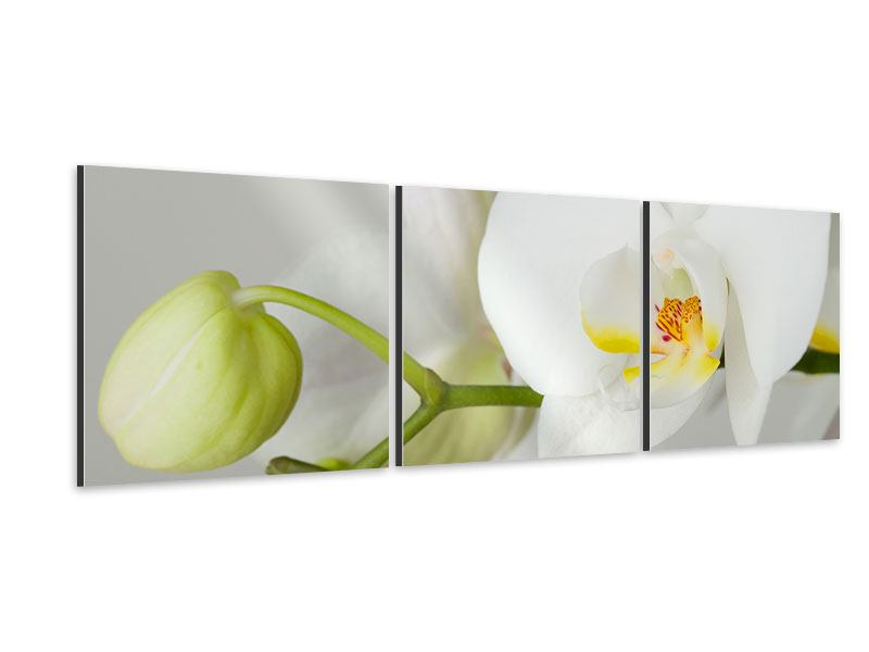 Panorama Aluminiumbild 3-teilig Riesenorchidee