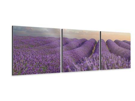 Panorama Aluminiumbild 3-teilig Das blühende Lavendelfeld