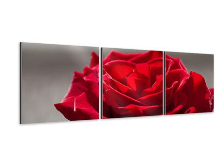 Panorama Aluminiumbild 3-teilig Rote Rosenblüte