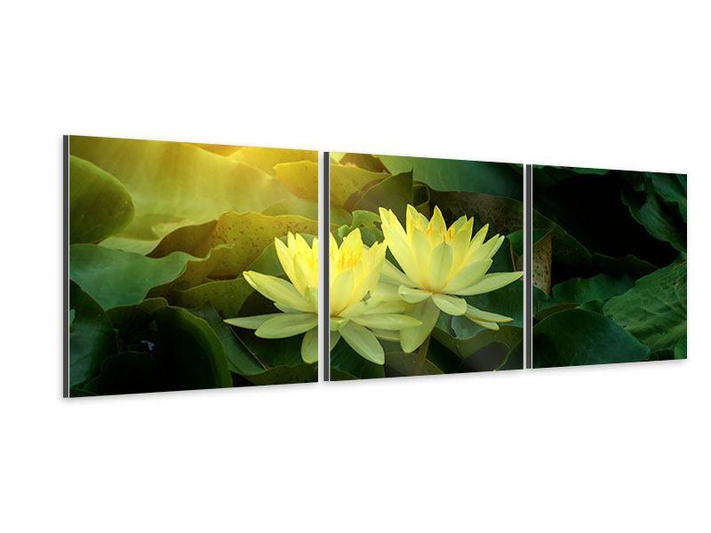 Panorama Aluminiumbild 3-teilig Wilde Lotus