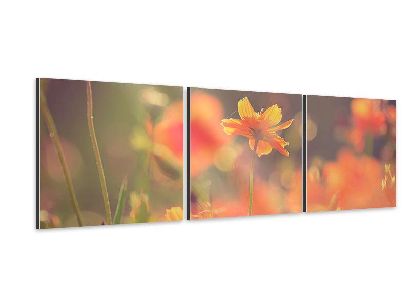 Panorama Aluminiumbild 3-teilig Blütenpracht