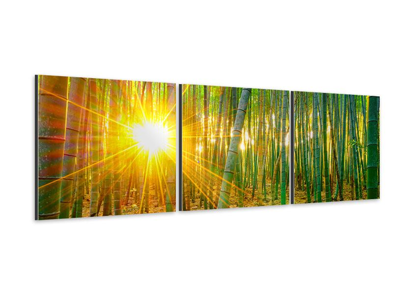 Panorama Aluminiumbild 3-teilig Bambusse
