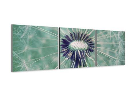 Panorama Aluminiumbild 3-teilig Close Up Pusteblume