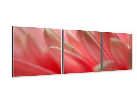 Panorama Aluminiumbild 3-teilig Close Up einer Blüte