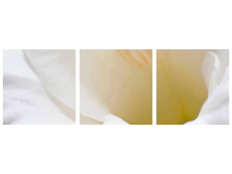 Panorama Aluminiumbild 3-teilig In einer Blüte