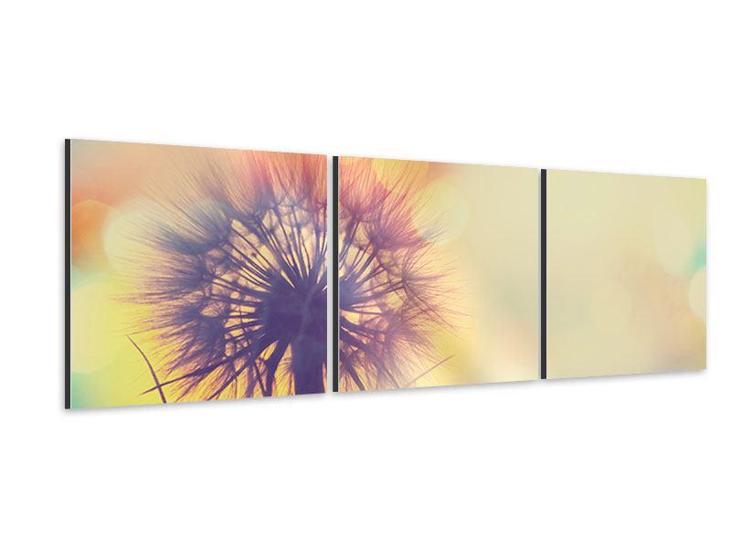 Panorama Aluminiumbild 3-teilig Die Pusteblume im Licht