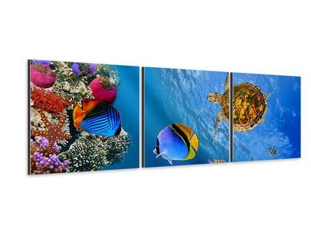 Panorama Aluminiumbild 3-teilig Fisch im Wasser