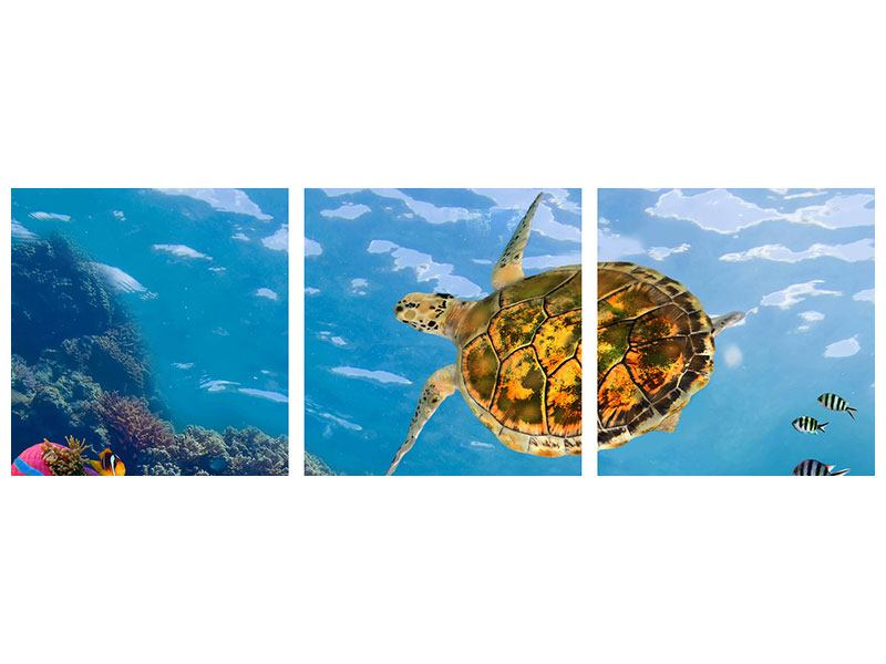 Panorama Aluminiumbild 3-teilig Die Wasserschildkröte