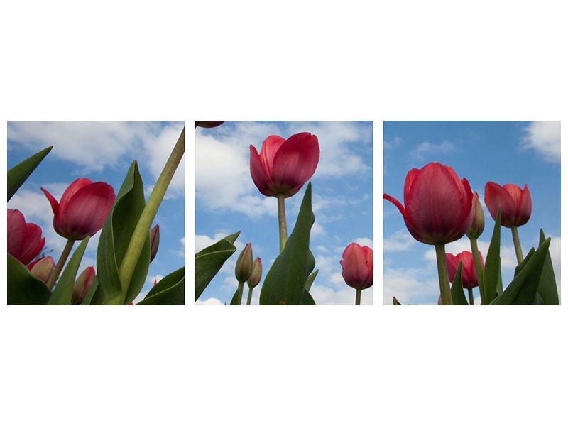 Panorama Aluminiumbild 3-teilig Tulpen im Himmel