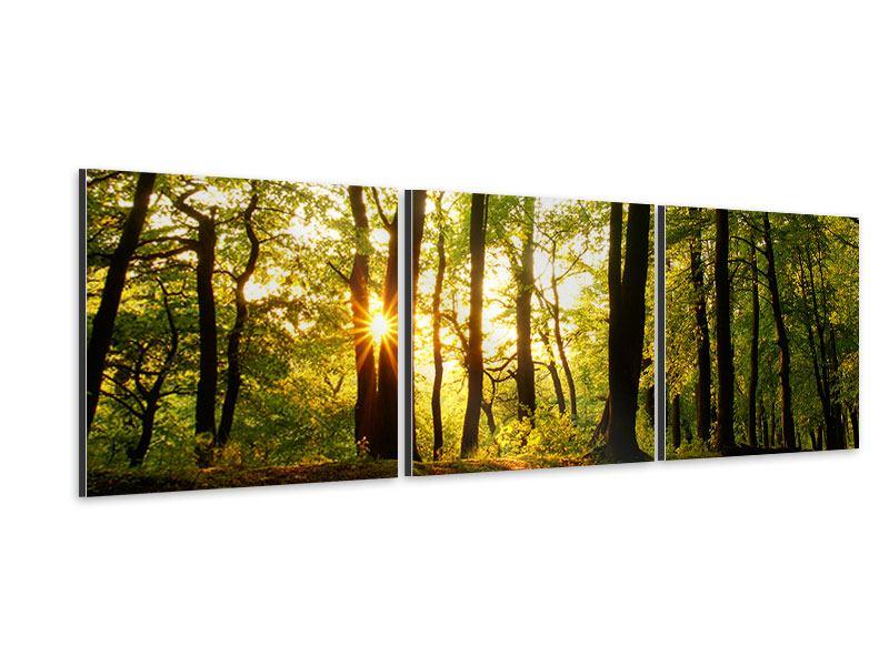 Panorama Aluminiumbild 3-teilig Sonnenuntergang zwischen den Bäumen