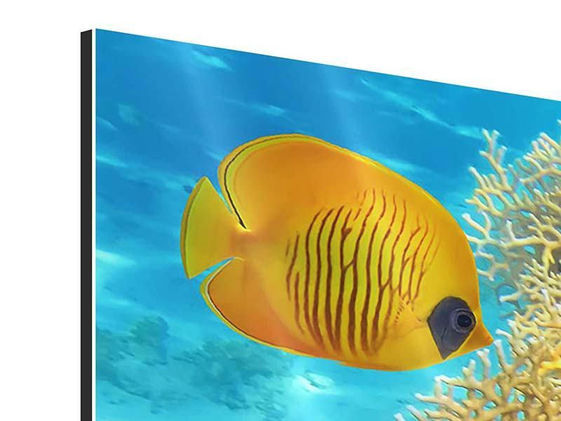 Panorama Aluminiumbild 3-teilig Fischreichtum