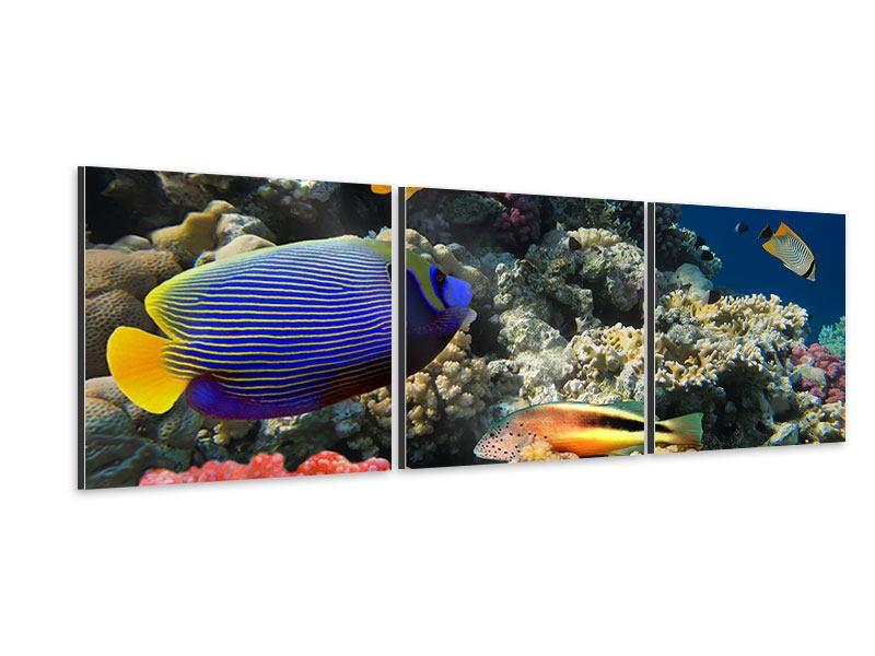 Panorama Aluminiumbild 3-teilig Das Aquarium