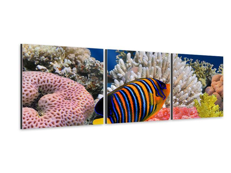 Panorama Aluminiumbild 3-teilig Mit den Fischen tauchen