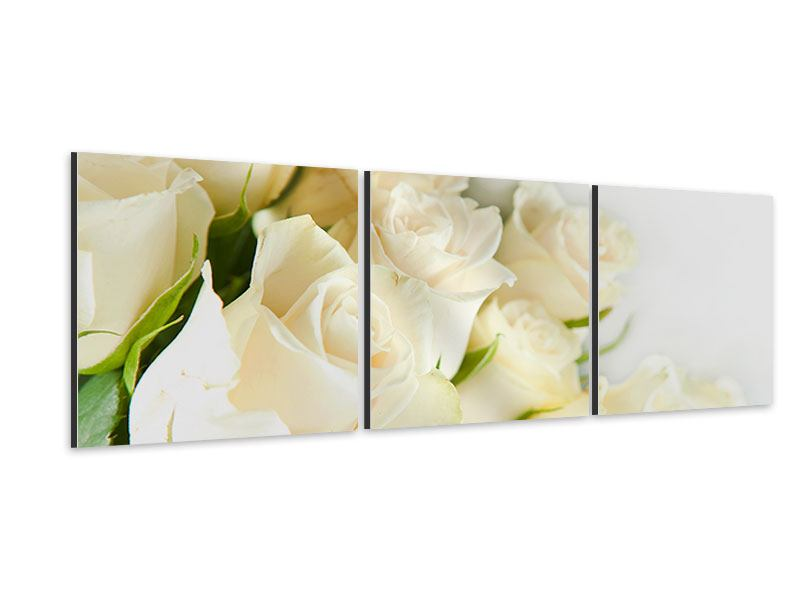 Panorama Aluminiumbild 3-teilig Weisse Rosen