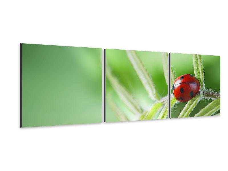 Panorama Aluminiumbild 3-teilig Marienkäfer XXL