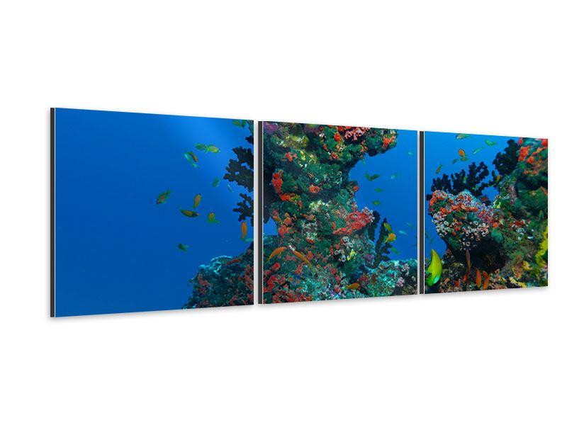 Panorama Aluminiumbild 3-teilig Die Welt der Fische