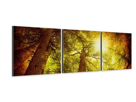 Panorama Aluminiumbild 3-teilig Cedar Baum