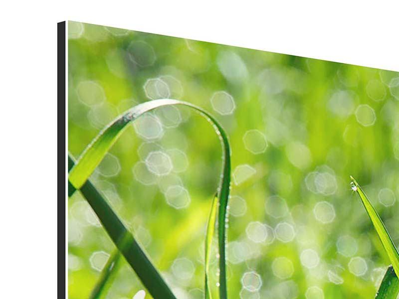 Panorama Aluminiumbild 3-teilig Sonniges Gras