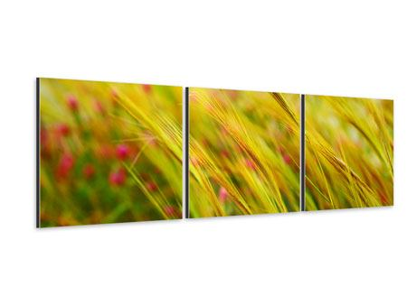 Panorama Aluminiumbild 3-teilig Das Weizenfeld