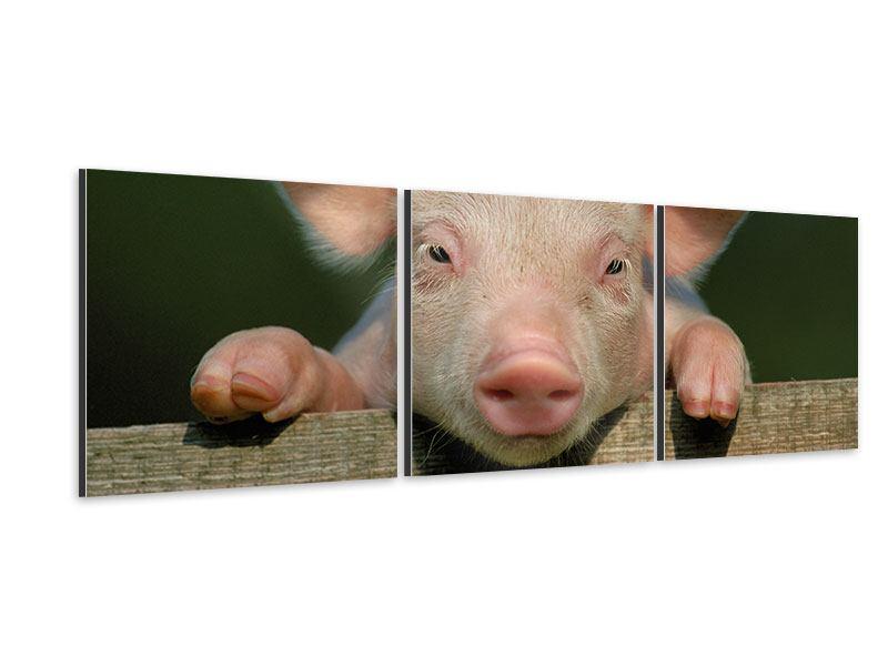 Panorama Aluminiumbild 3-teilig Schweinchen Namens Babe