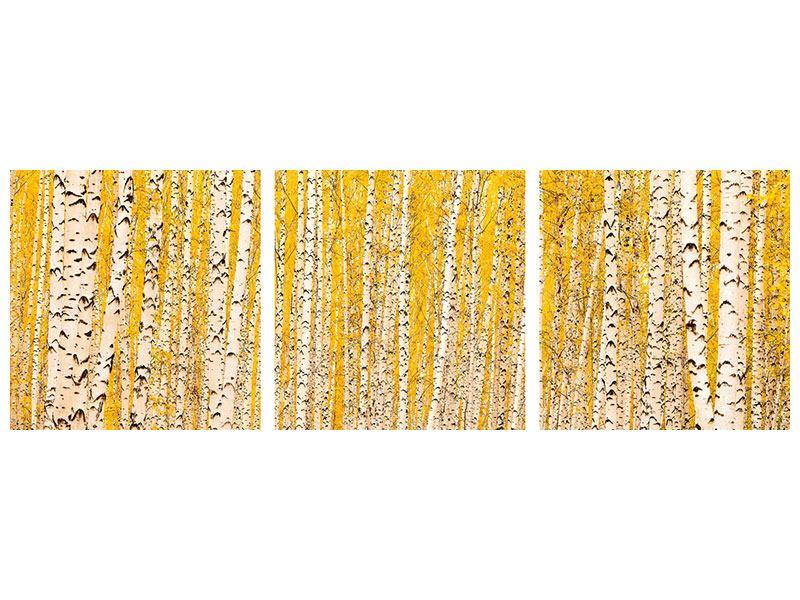 Panorama Aluminiumbild 3-teilig Der Birkenwald im Herbst