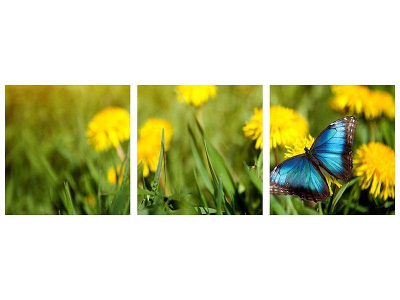 Panorama Aluminiumbild 3-teilig Der Löwenzahn und der Schmetterling