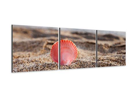 Panorama Aluminiumbild 3-teilig Die Muschel