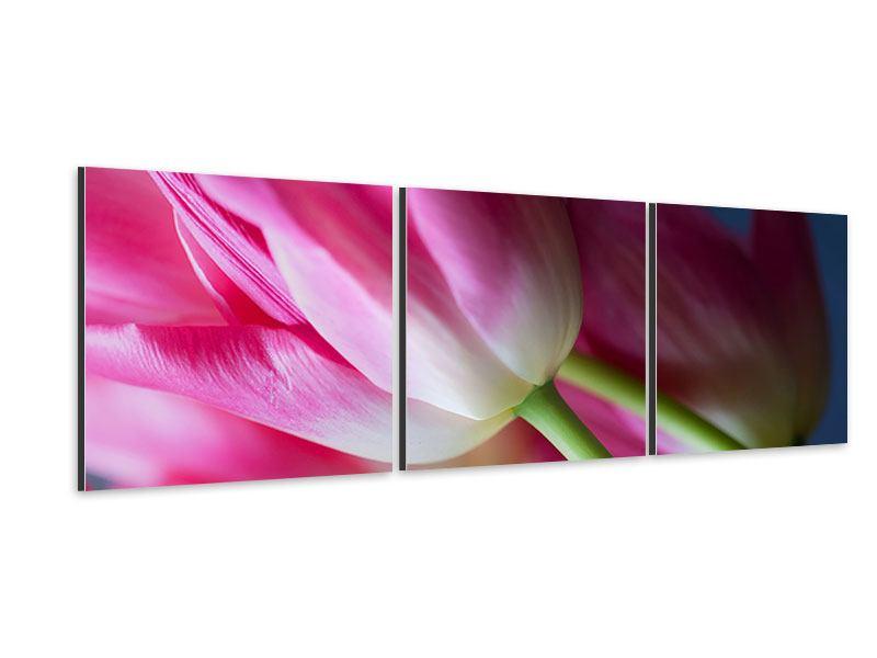 Panorama Aluminiumbild 3-teilig Makro Tulpen