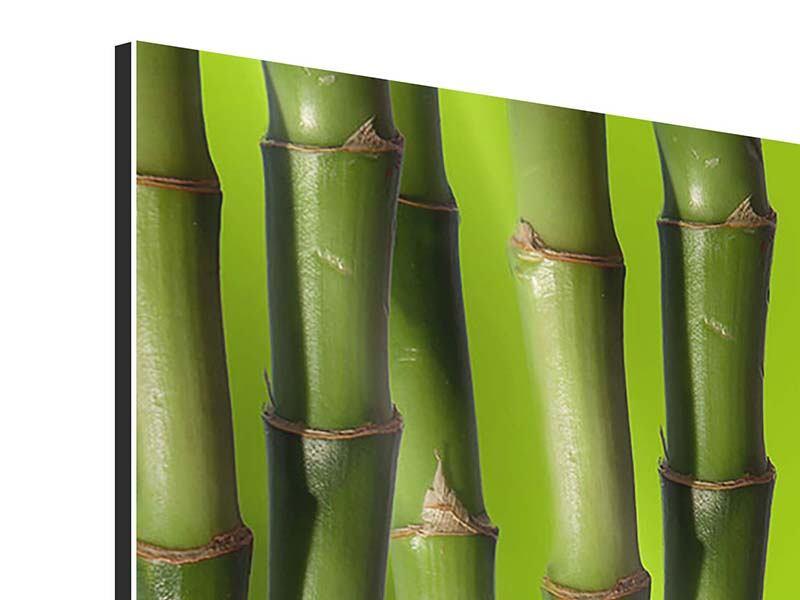 Panorama Aluminiumbild 3-teilig Der Bambus