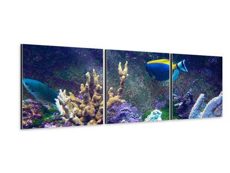 Panorama Aluminiumbild 3-teilig Fische