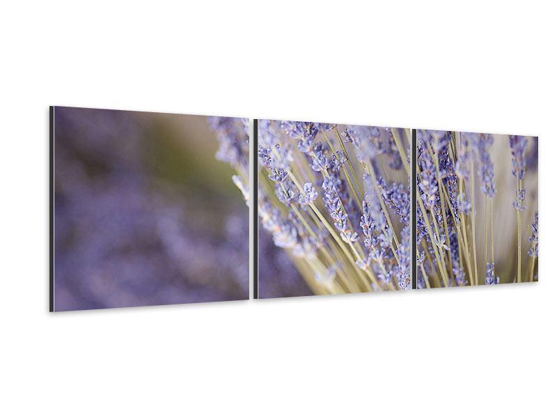 Panorama Aluminiumbild 3-teilig Lavendel XXL