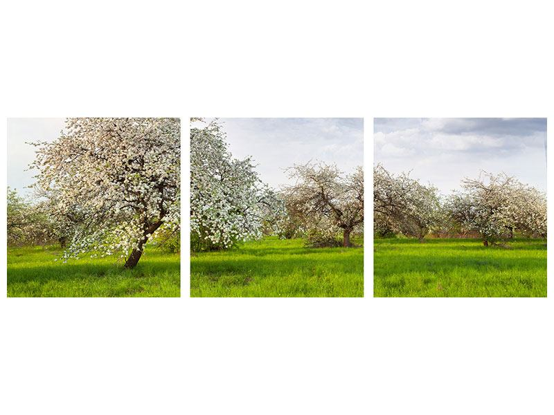Panorama Aluminiumbild 3-teilig Apfelbaum-Garten