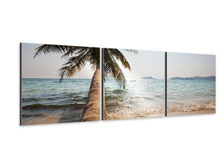 Panorama Aluminiumbild 3-teilig Palme