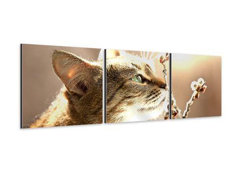 Panorama Aluminiumbild 3-teilig Die Katze