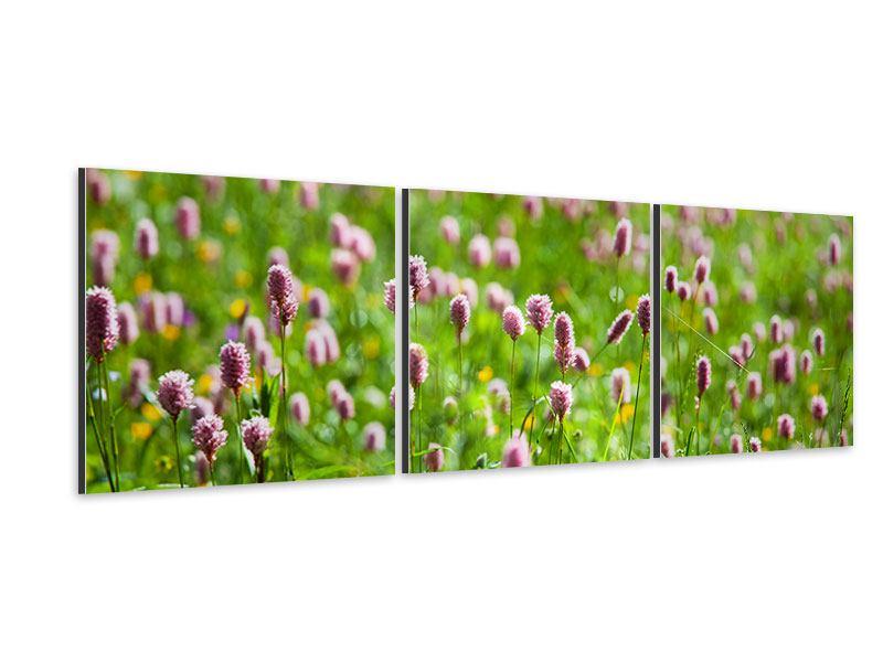 Panorama Aluminiumbild 3-teilig Der Wiesenklee