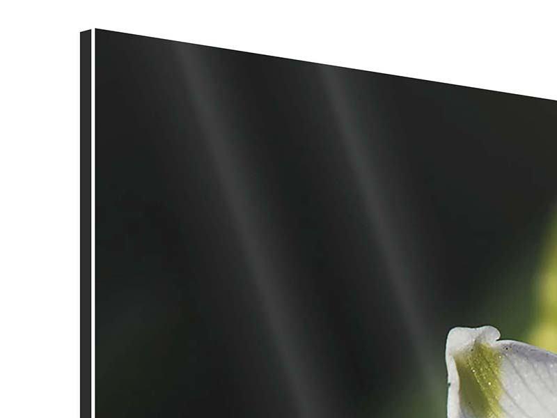 Panorama Aluminiumbild 3-teilig Schneeglöckchen XXL