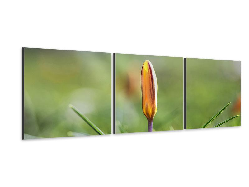 Panorama Aluminiumbild 3-teilig Die Blütenknospe