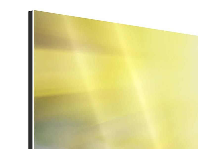 Panorama Aluminiumbild 3-teilig Blumige Wiese
