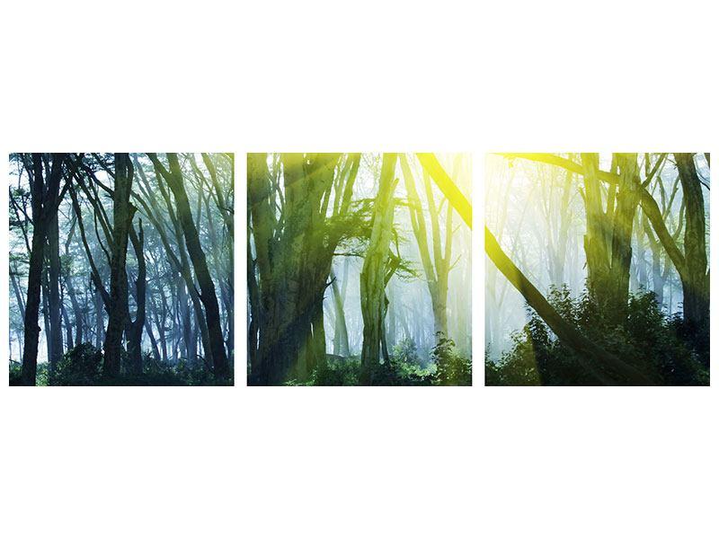 Panorama Aluminiumbild 3-teilig Sonnenstrahlen im Wald