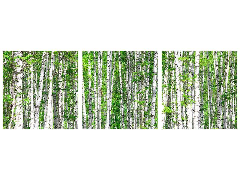 Panorama Aluminiumbild 3-teilig Der Birkenwald