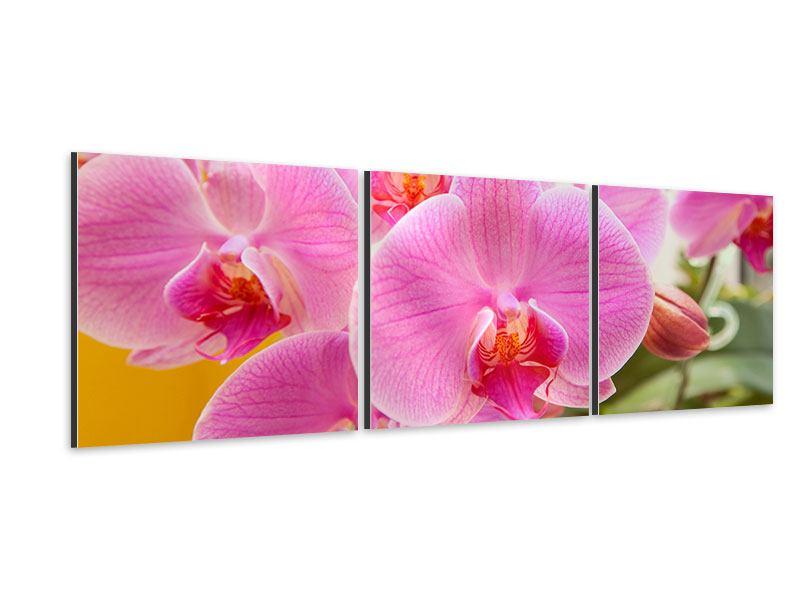 Panorama Aluminiumbild 3-teilig Königliche Orchideen