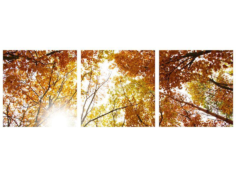 Panorama Aluminiumbild 3-teilig Herbstbäume