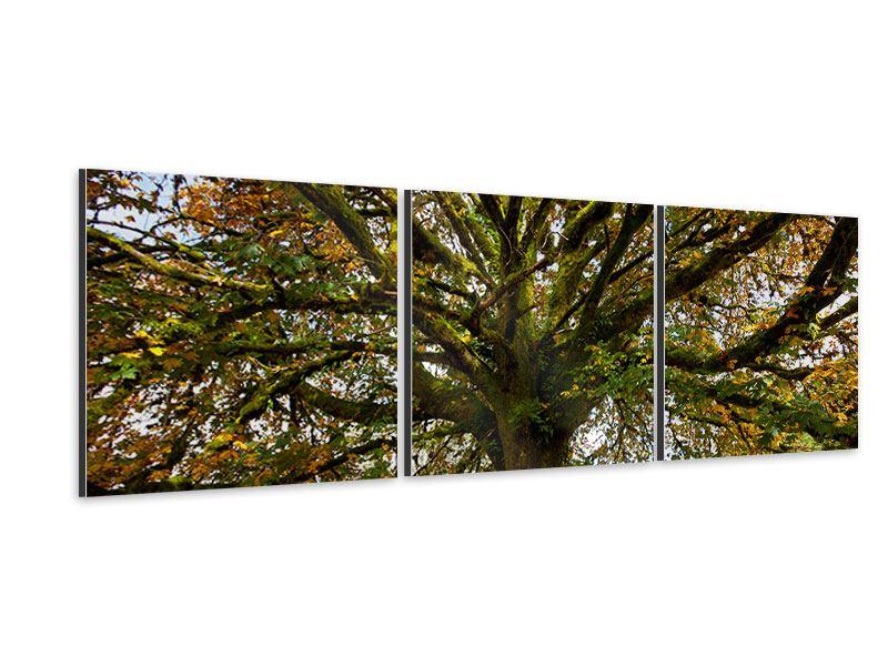 Panorama Aluminiumbild 3-teilig Mein Lieblingsbaum
