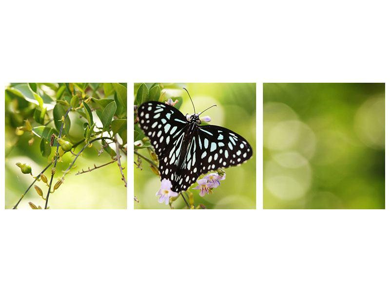 Panorama Aluminiumbild 3-teilig Papilio Schmetterling XXL