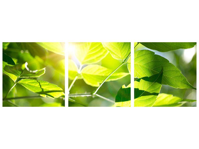Panorama Aluminiumbild 3-teilig Es grünt so grün