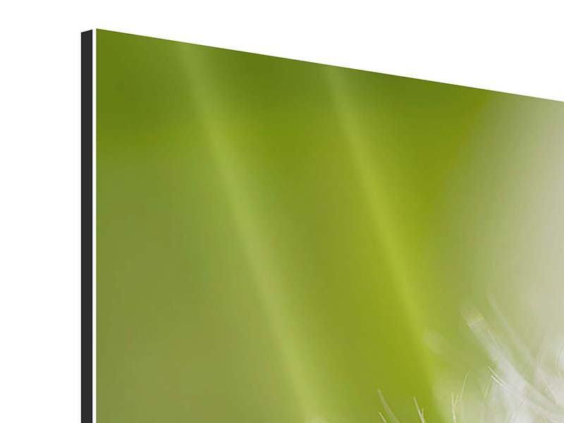 Panorama Aluminiumbild 3-teilig Pusteblume Löwenzahn