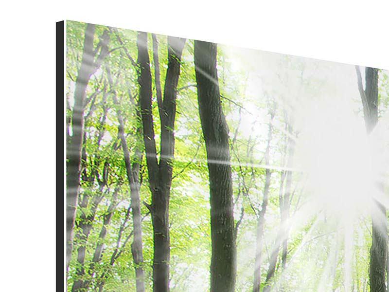 Panorama Aluminiumbild 3-teilig Magisches Licht in den Bäumen